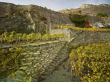 Rebberg «Clos de la Cochetta» bei Sion, Wallis
